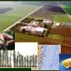 Agricoltura e innovazione