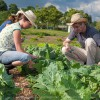 L'avvenire dell'agricoltura europea