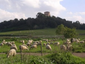 """Cooperativa Sociale """"Agricoltura Nuova"""" - Roma"""