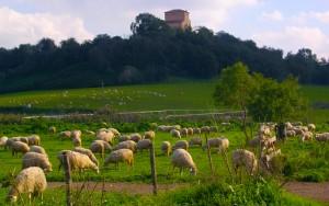agricoltura roma
