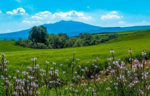 Dalla Masseria del Bosco delle Rose, a Lavello, il Vulture, i campi di grano, le friches e un cuore di bosco