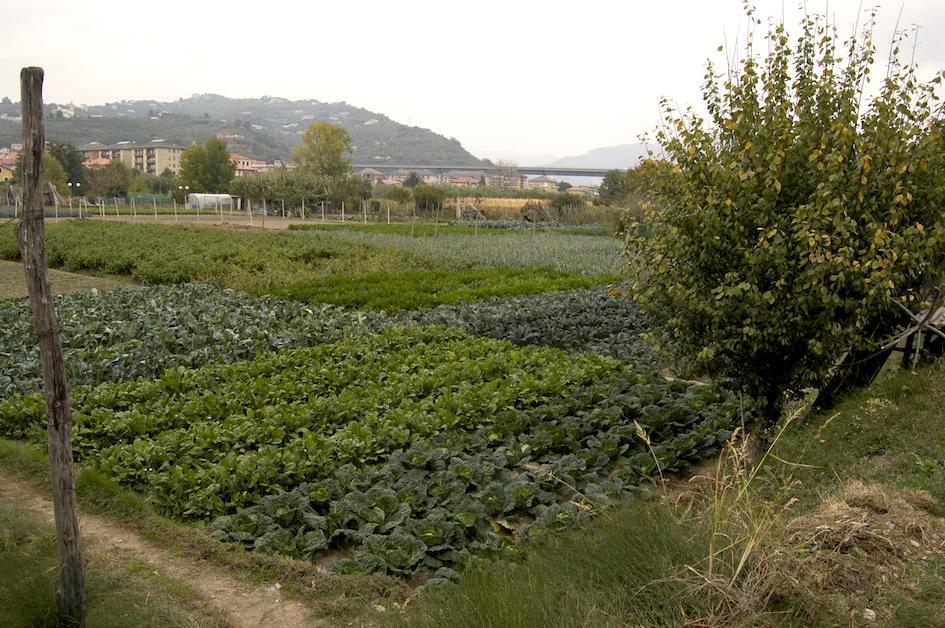 Orti periurbani della valle del fiume Entella (Liguria)