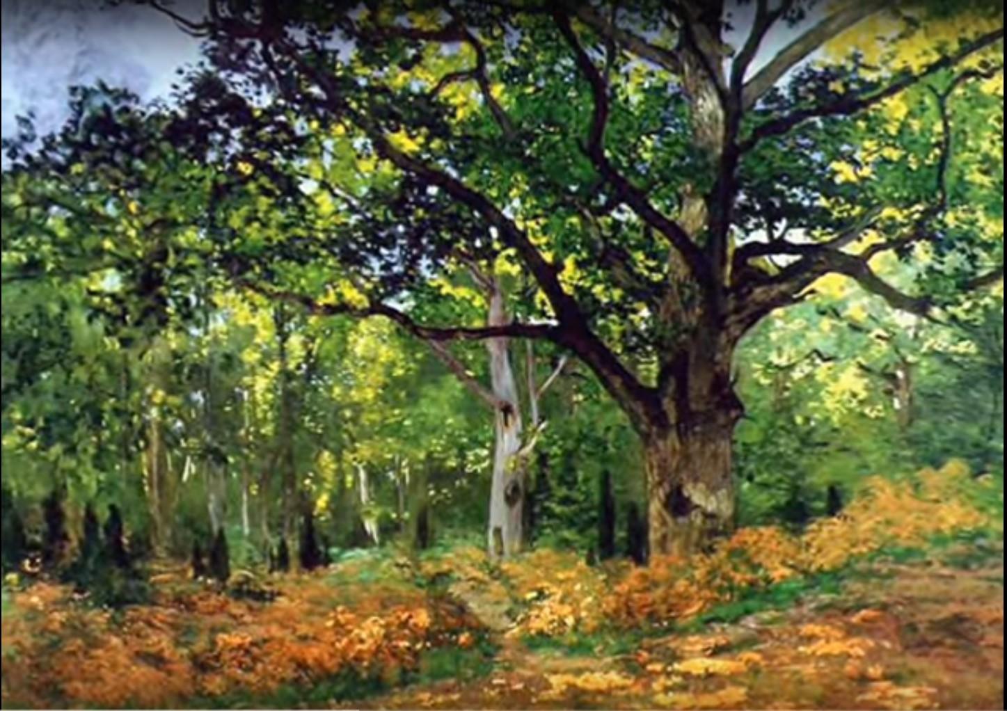 Periodo Migliore Per Potare Quercia alberi e filosofia hanno le stesse radici - alfonso pascale